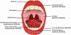 The anatomy of the oral cavity. The sublingual and buccal ...