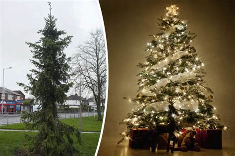 worst christmas tree  meet  twig daily star