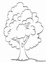 Tree Coloring Pages Summer Printable Season sketch template
