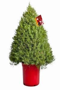 Baum Im Topf : weihnachtsbaum im topf festliche deko sch ner zusatz zum garten ~ A.2002-acura-tl-radio.info Haus und Dekorationen