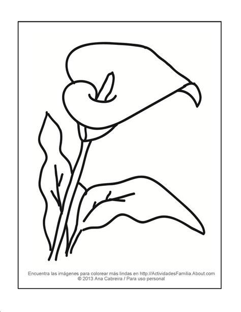 dibujos de calas imagui dibujo calas flores para