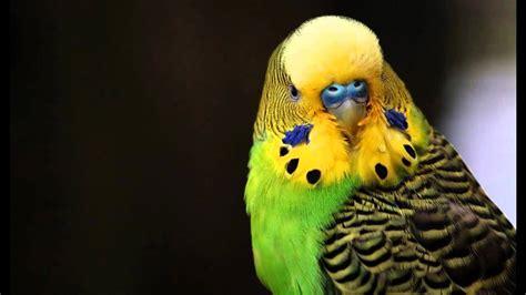 Die Schönste Farbe Der Welt by Die S 252 223 Esten V 246 Gel Der Welt
