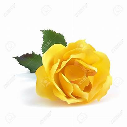 Yellow Rose Clipart Pale Single Flower Clip