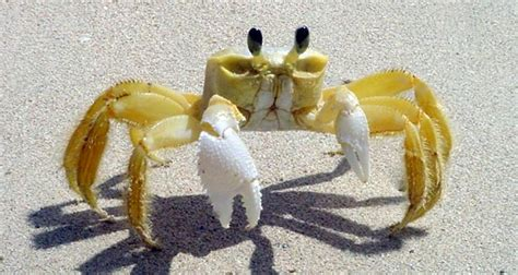 interesting facts about the crab 594 | crab