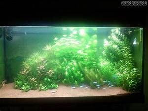 Co2 Rechner Aquarium : stauro jungle flowgrow aquascape aquarium database ~ Orissabook.com Haus und Dekorationen