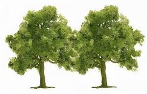 Bäume Verschneiden Obstbäume : 2 obstb ume obstb ume ausgestaltung b ume katalog ~ Lizthompson.info Haus und Dekorationen