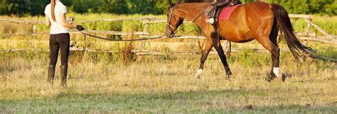 near riding horseback lessons