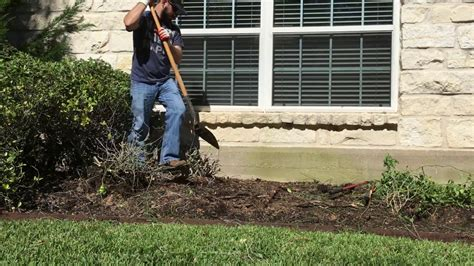 Removing Trees From Backyard by How To Remove Bushes Shrubs Easily