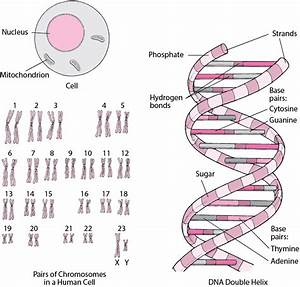 Genes And Chromosomes - Fundamentals