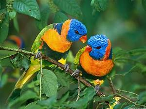 Birds Wallpaper Free Download | High Definition Wallpapers ...