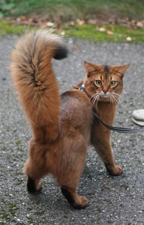 cats tail   kitties images  pinterest