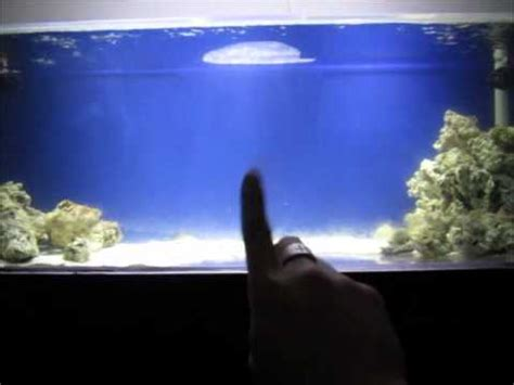 saltwater aquarium fish tank reef living shark tank 3 9 12