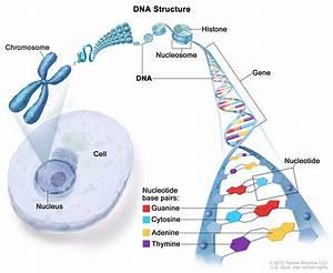 Chromosome  Patient