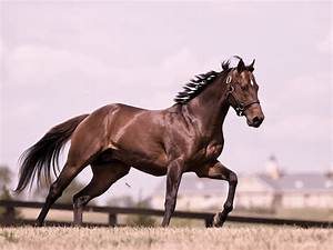 Hd horse wallpaper with a fast running white brown horse ...