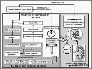 Стандарты лечения при гипертонической болезни
