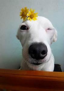 Conhe U00e7a O Cachorro Sorridente Da Tail U00e2ndia  Euro