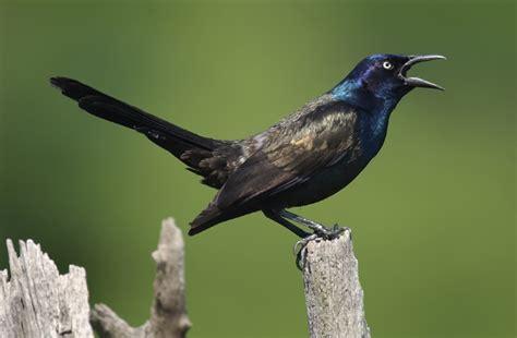 nuisance birds that guy