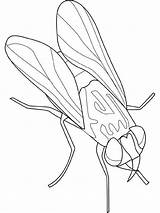 Fly Coloring Insect Animal Kingdom Disease Bring Sheet Sky Coloringsky Could sketch template