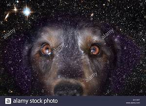 """The Brightest Star in the night sky is Sirius... The """"Dog ..."""