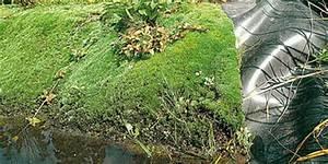 Teichrand Gestalten Bilder : uferbau durchdacht mit naturagart sch ne teichufer ~ Articles-book.com Haus und Dekorationen