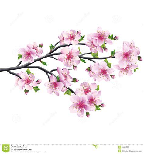 foto de Flor De Cerejeira árvore Japonesa Sakura Ilustração do