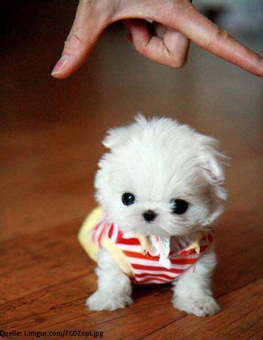 Weitere ideen zu hunde, hundesprüche, hund zitat. Super süße Hunde Babys - die winzigsten Hundewelpen. Klein und super niedlich. | Süße hunde ...