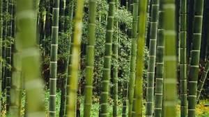 Bambus Vernichten Tipps : sichtschutz aus bambus sat 1 ratgeber ~ Whattoseeinmadrid.com Haus und Dekorationen
