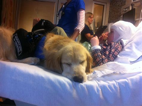 How Seizure Dogs Help People With Epilepsy Live Better