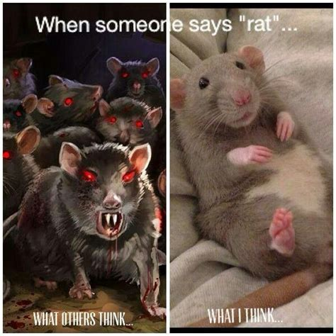 Rat Memes - drawn rodent the house meme pencil and in color drawn rodent the house meme