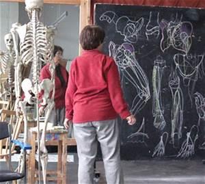 Anatomie für Künstler München Akthof - Sommerakademie ...