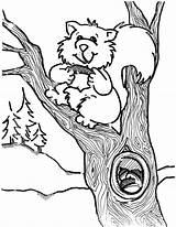 Coloring Squirrel Printable Squirrels Clipart Cartoon Sheets Animal Tree Cliparts Clip Sheet Flying Boyama Squirl sketch template