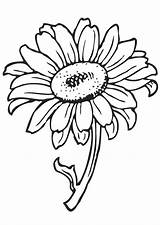 Coloring Flower Pages Printable Getcolorings Sunflower sketch template