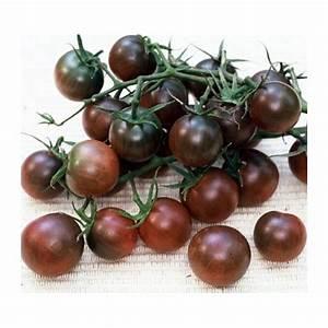 Tomate Noir De Crimée : graines tomate cerise 39 black cherry 39 ~ Dailycaller-alerts.com Idées de Décoration
