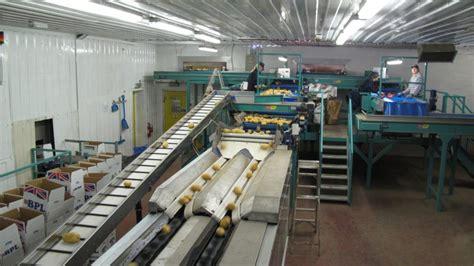vegetable grading machine maf roda tong engineering uk