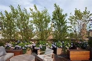 Arbuste Brise Vue : un arbre au balcon ~ Preciouscoupons.com Idées de Décoration