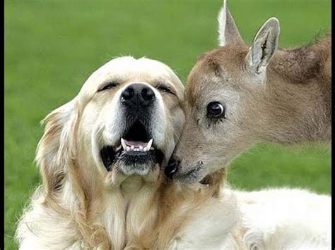Unbelievable Unlikely Animal Friendships Compilation [HD