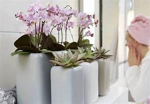 Dekorative Pflanzen Fürs Wohnzimmer : aus der aktuellen ausgabe bl tenromantik im stil englischer g rten dekoration pinterest ~ Eleganceandgraceweddings.com Haus und Dekorationen
