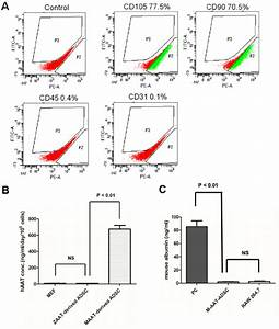 Characterization Of Adipose Tissue Derived Stem Cells