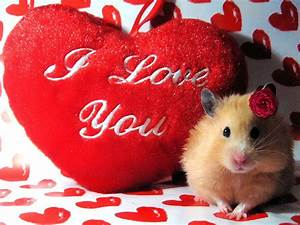 I, Love, U2665, You, Heart, Hd, Wallpapers