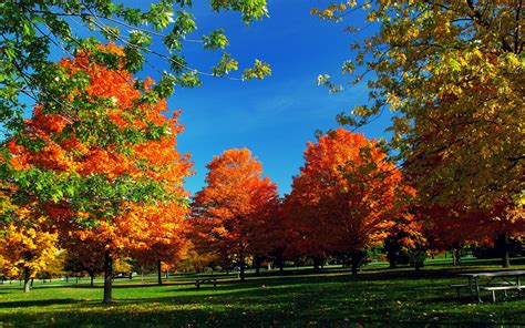Autumn Wallpapers Widescreen by Autumn Hd Widescreen Wallpaper 71 Images
