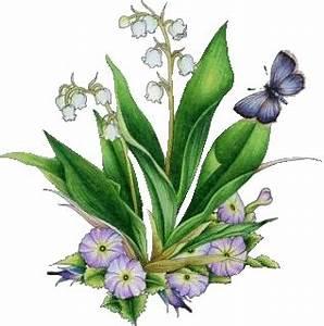 Quand Planter Le Muguet : muguet planter fleur de naissance de mai ~ Melissatoandfro.com Idées de Décoration