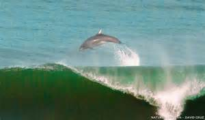 Porpoise Vs. Dolphin