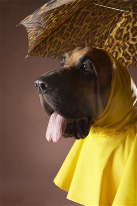 rain hats  dogs dog care daily puppy