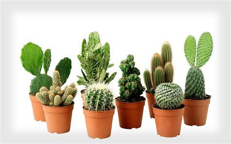 Plantas para ambientes fechados [10 ótimas sugestões]