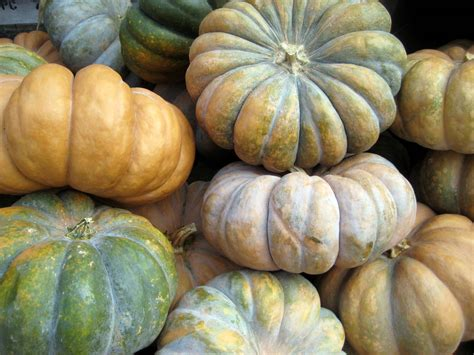 types of pumpkins liddy cakes pumpkin patch