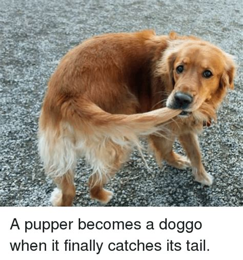 Pupper Memes - search i am pupper memes on me me