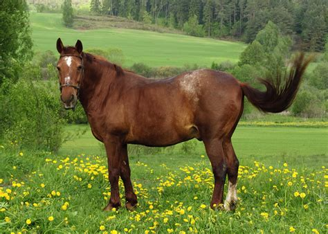 horse horses hd desktop pasture meadow backgrounds feeding condition animals equine racing royalty happy healthy feed body bcs keeper five