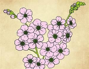 Dessin Fleur De Cerisier Japonais Noir Et Blanc : dessin fleur de cerisier good fabulous rico design toile ~ Melissatoandfro.com Idées de Décoration