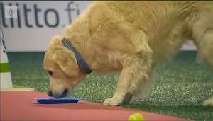 how much should my golden retriever be eating