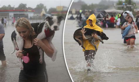 hurricane harvey pet rescue operation saves thousands